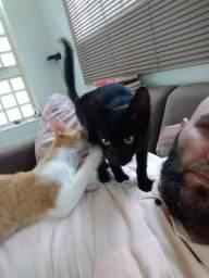 Doação Gatos Brincalhões