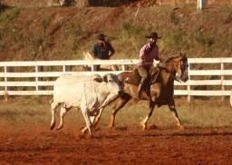 Vendo cavalo