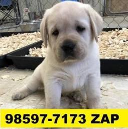 Canil Premium Cães Filhotes BH Labrador Boxer Dálmatas Pastor Golden Akita