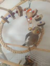 Lily Bily calopsitas brinquedos, para aves.