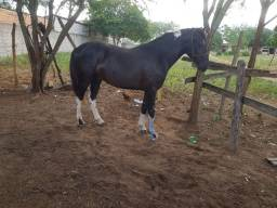 Cavalo manga larga pampa de preto