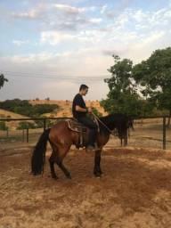 Cavalo filho do country dun it