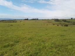 Fazenda de 52 alqueires em Carlópolis PR