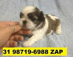 Canil Lindos Filhotes Cães BH Shihtzu Poodle Beagle Yorkshire Maltês Bulldog Pug Lhasa
