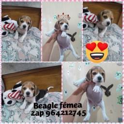 Beagles top UM Casal