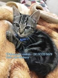 Doação gato macho 3 meses