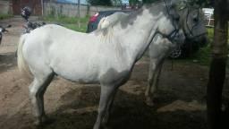 Vendo cavalo machador bom