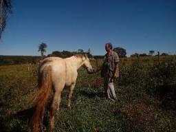 Lindo cavalo manga larga machado