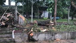 Corte e podas de árvores serviço completo