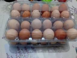 Título do anúncio: Ovos caipira. Criado no sistema caipira. Na roça .  Com tudo orgânico.