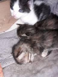 Título do anúncio: Gatinhos recém nascido