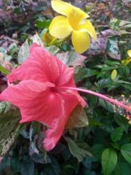 Flores/Plantas (Promoção)