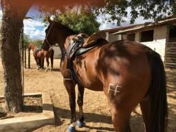 Cavalo de esquerda