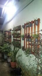 Paletes para plantas sobre encomenda