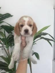 Beagle chamar no what's para informações