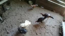 Vendo os 5 galin