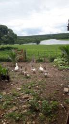 Fazenda com 380 hectares na região de macaiba
