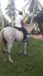 3 cavalos