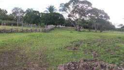 Fazenda com 314 hectares em José de Freitas-PI (Grande Oportunidade de Investimento)