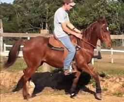 Torro cavalo
