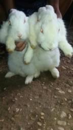 Casal de coelhos lindos
