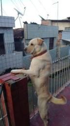 Título do anúncio: cão para doação