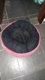 Cama de cachorro em pneu