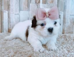 Linda filhote lhasa apso disponível pra venda @canil kennil Raquel Vargas
