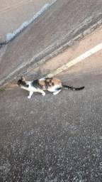 gatinhos para adoção responsável