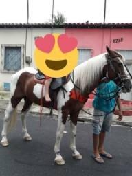 Cavalo de Raça 5.000