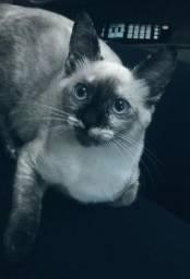 Doação - Linda gatinha filhote