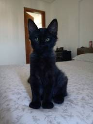 Gatinha preta disponível para adoção responsável