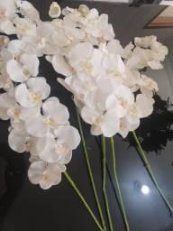 5 hastes de orquídeas toque real