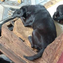 Doa-se cachorros porte médio