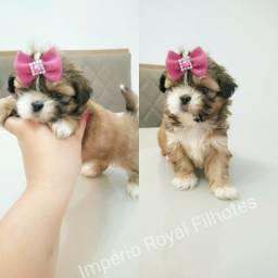 Shihtzu Muito Linda! Fotos Reais! Com pedigree e vacinada