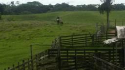 Vendo uma propriedade rural com 250 cabeça de gado, preço negociável