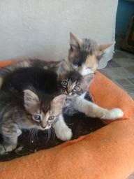 Doacao de filhos de gatinho