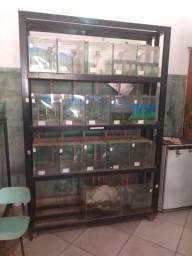 Vendo módulo com 15 aquários mais bomba.