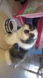 Cachorro macho shih.tsu 1 ano 4 meses