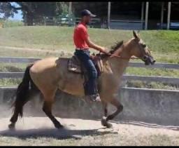 Cavalo de Sela Campolina - PREÇÃO
