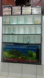 Aquarios em mogno na parede