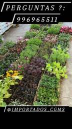 Título do anúncio: Mudas plantas e flores saude em casa