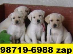 Canil Profissional Filhotes Cães BH Labrador Pastor Akita Boxer Rottweiler Dálmata Golden