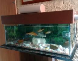 Aquario 90cm com 4 carpas ( leia descriçao)