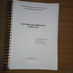 Anatomia Ruminantes Domésticos - Autores Hugo pereira - Fabio M.  - Jair F.  <br><br>