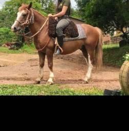 Cavalo Petiço
