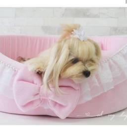 Caminha Oh My Dog