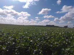 Negocio Fazenda , campos na região e Brasil