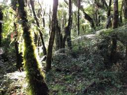 Terreno com 20.000 m², plana/mata/nascente/ área in-natura só R$120mil