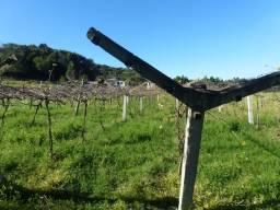 Barracão Area Rural - Locação